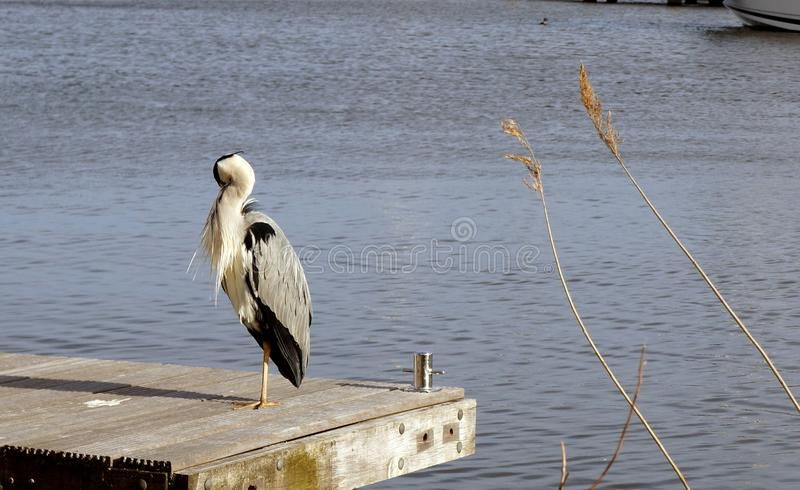 Lonely bird. On the boat dock in spring royalty free stock photo