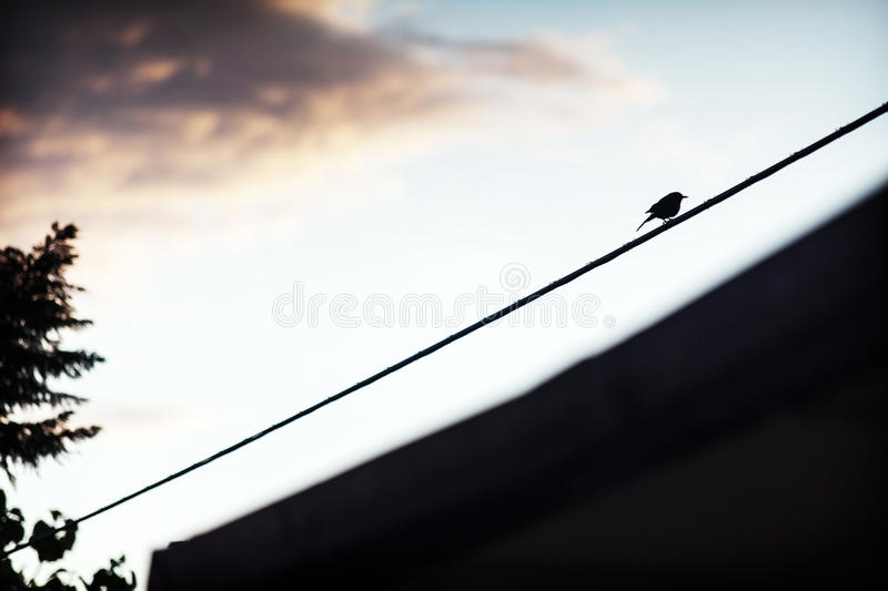 Lonely bird on electrical wire royalty free stock photos