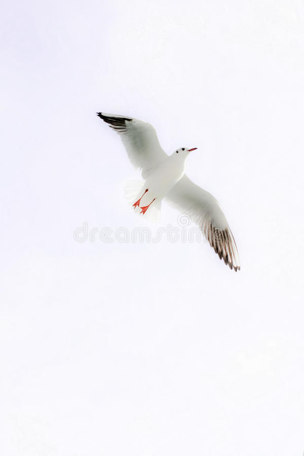 Lonely bird lives royalty free stock photos