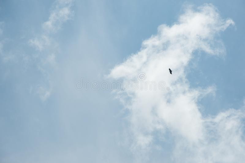 A lonely bird with spread wings in a blue sky with light clouds. The concept of freedom and loneliness stock photo