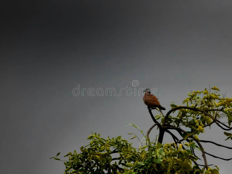 Lonely bird in a storm cloud. royalty free stock images