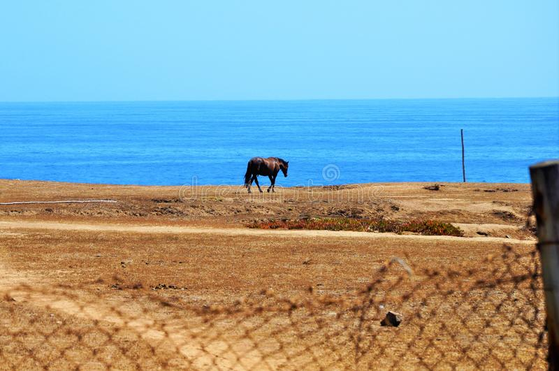 Lonely black horse in the pasture near the calm sea under the blue sky. A lonely black horse in the pasture near the calm sea under the blue sky stock photo