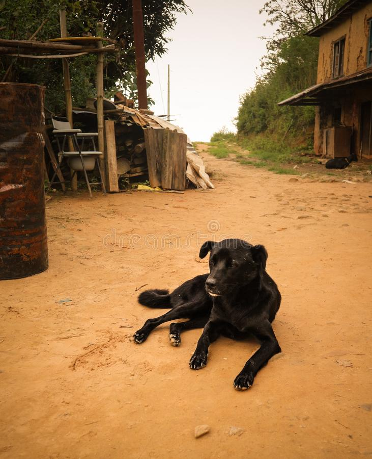 Lonely black stray dog resting on the ground in Kathmandu village, Nepal. Lonely black stray dog resting on the ground in a Kathmandu village, Nepal stock photos