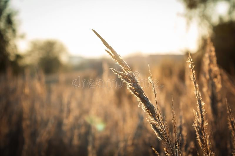Lonely blade of grass in the field stock image