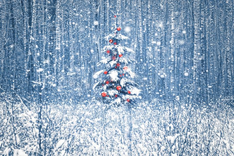 Lonely blue spruce with red christmas decorations in a snowy winter forest. stock image