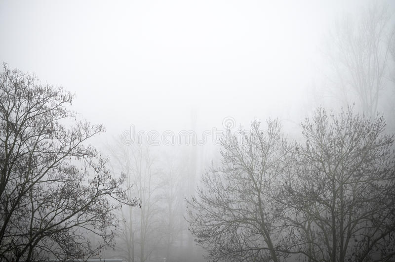 Lonely branch in the fog Black and white royalty free stock images