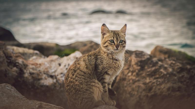 Lonely brown cat look at the sea stock image
