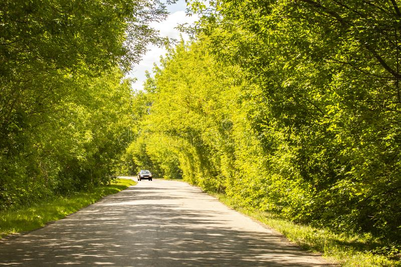 Lonely car under the canopy of green foliage of deciduous trees, bright sunny summer day royalty free stock photo