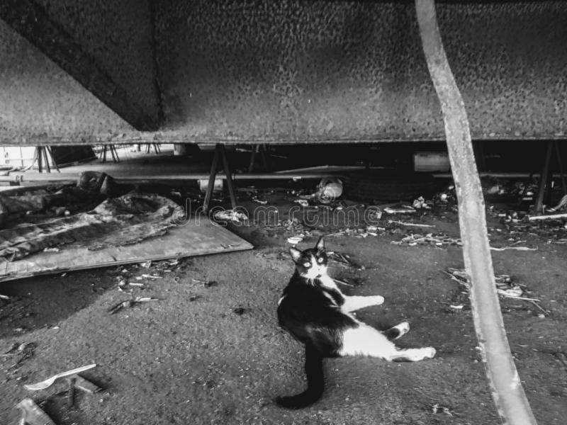Lonely cat, black and white cat, cat under a building, deselect environment with cat, feral cat, garbage with cat stock photo