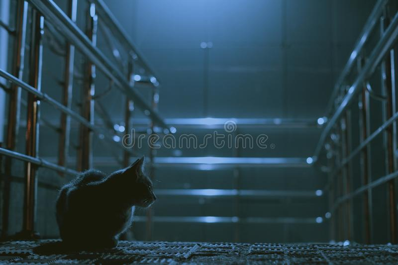 A lonely cat in a night city royalty free stock photo