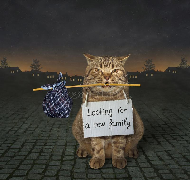 Cat looking for a new family royalty free stock photo