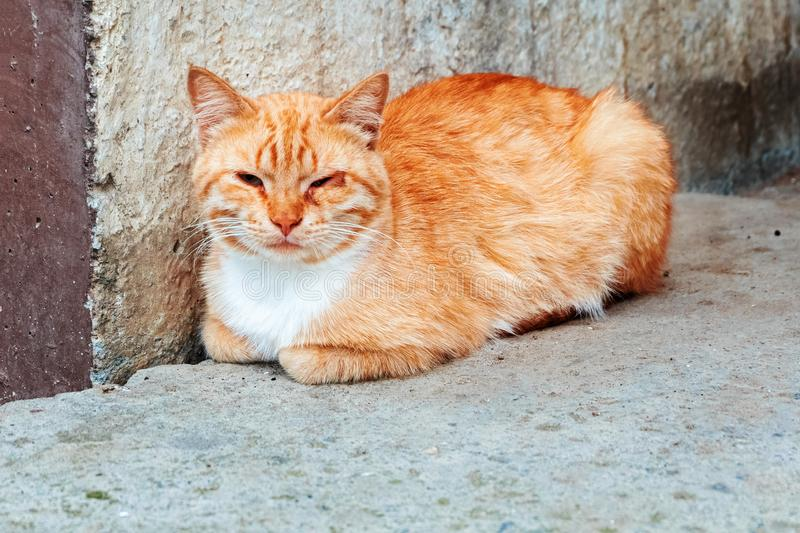 Lonely cat sits outdoors near a concrete wall. Cat with eye disease stock photo