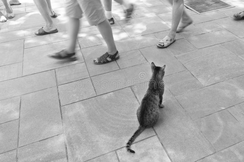 Lonely cat sitting on the street.People walk past the homeless animal.Black and white photo. Lonely cat sitting on the street.People walk past homeless animal stock images