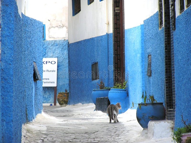 Lonely Cat walking on the Lonely Alley, Udaya, Morocco royalty free stock images