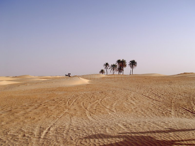 Download Lonely chariot stock image. Image of caravan, camels, camel - 965819