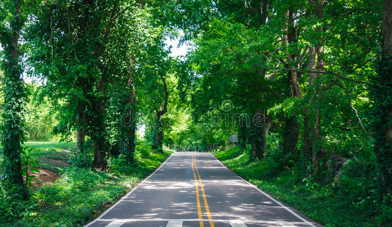 Lonely Country Road in Summer with Tree Canopy stock photography