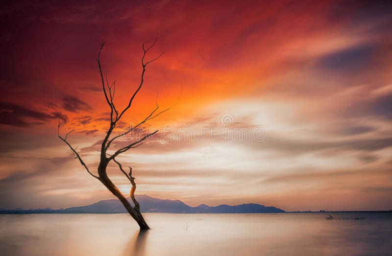 Lonely dead tree stock image