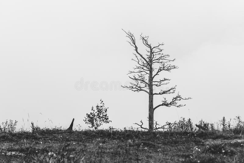 Lonely dead tree. On field landscape. Art nature stock photography