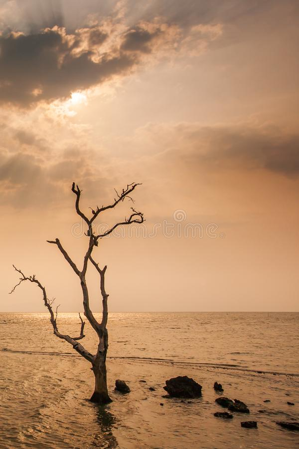 A lonely dead tree stand by the sea, dramatic storm dark cloudy sky over sea. Abandoned dead tree in storm sea. Boiling, climate royalty free stock photos