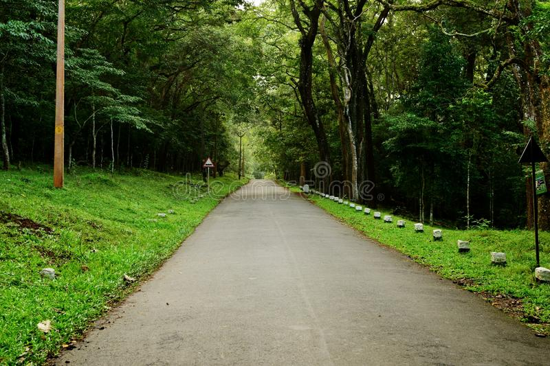 A lonely deserted road through a dense forest on an early morning royalty free stock image