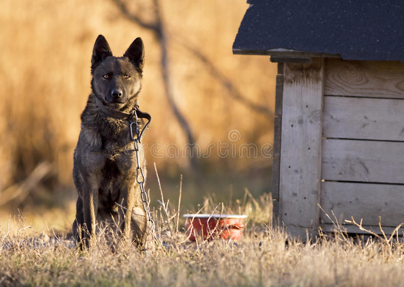 Download Lonely Dog Royalty Free Stock Photos - Image: 23791038