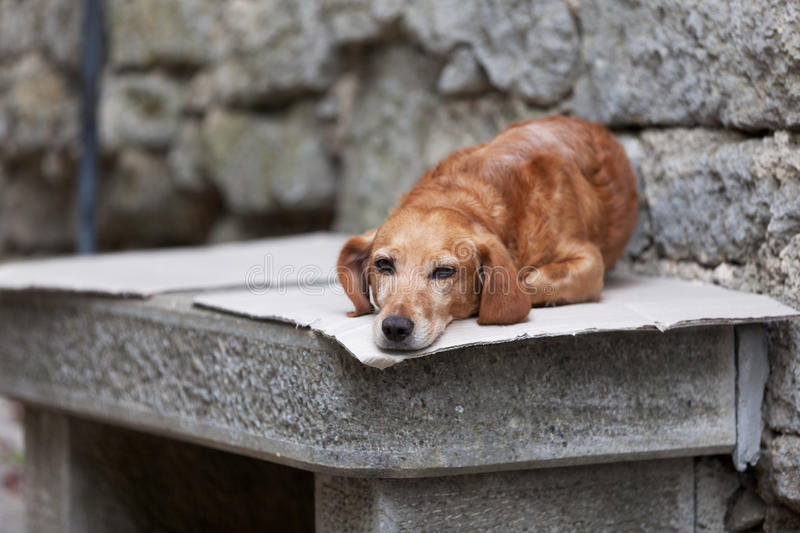 Lonely dog. Waitng for its owner royalty free stock photo