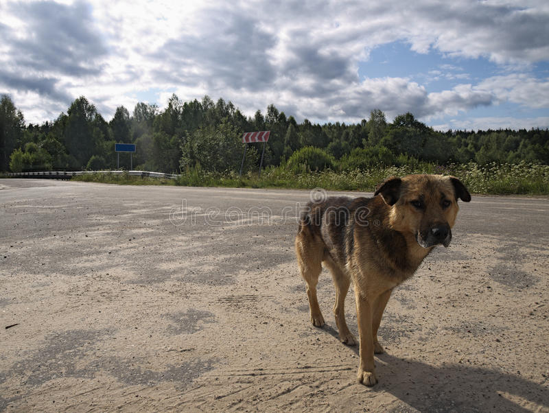 Lonely dog abandoned. On crossroads of country roads royalty free stock photography