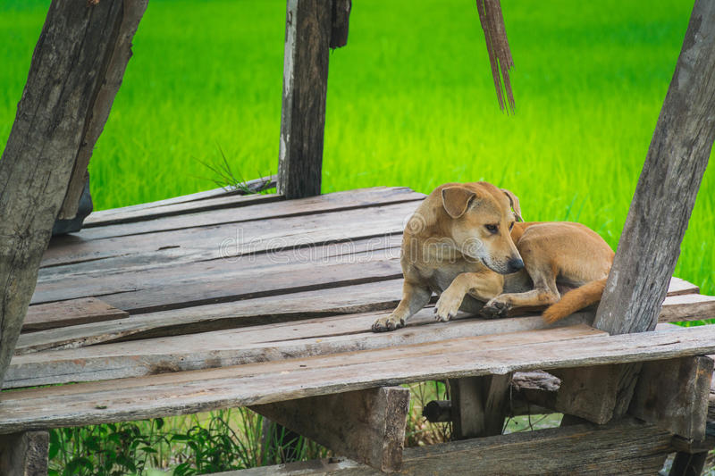 Lonely dog. royalty free stock image