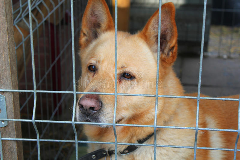 Lonely Dog in the animal shelter royalty free stock photos