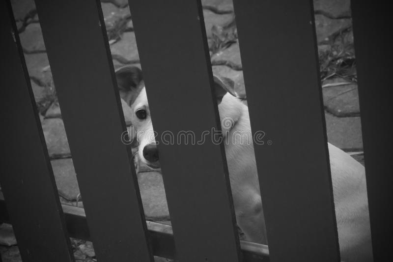Lonely dog is caged in a house royalty free stock image