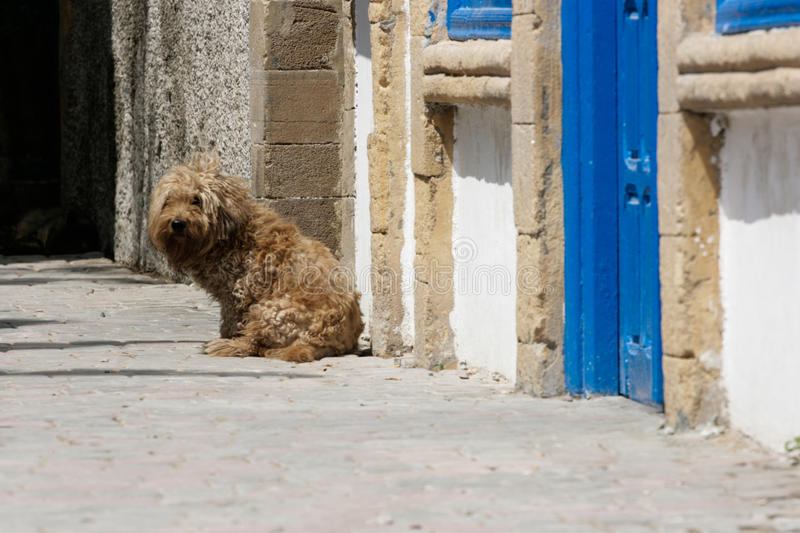 Lonely dog in Essaouira port, Morocco royalty free stock image