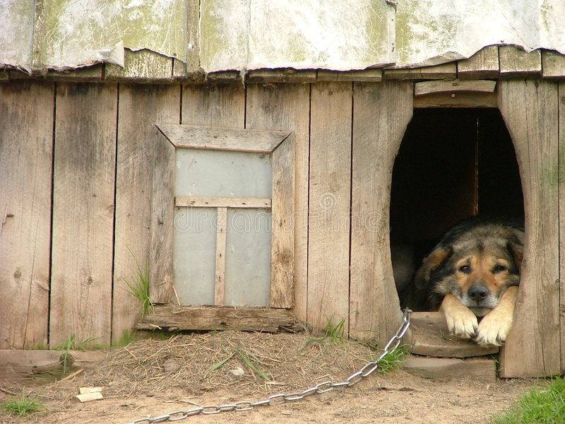 Lonely dog in his kennel royalty free stock photo