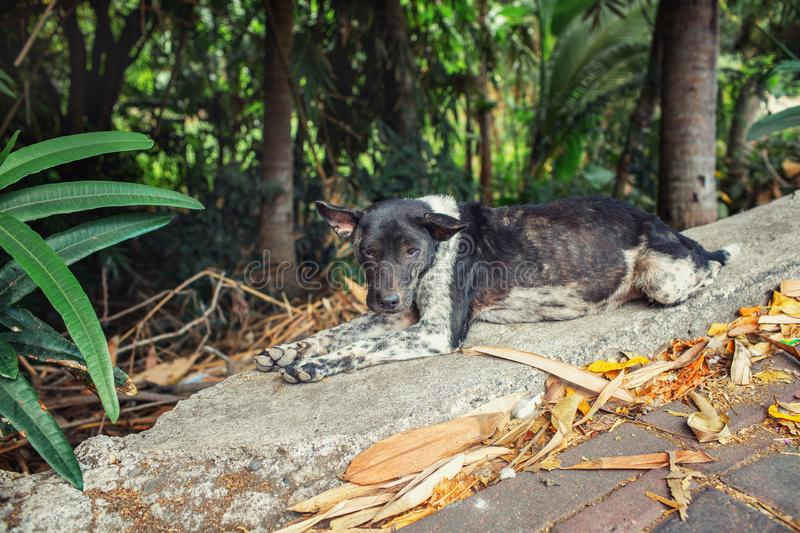 Lonely dog, Jimbaran. Bali Indonesia royalty free stock photo