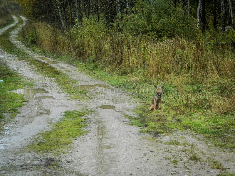 Lonely dog in a Russian village. Abandoned Pets are always sympathetic. This abandoned dog shot in the Kaluga region in the Russian village stock image