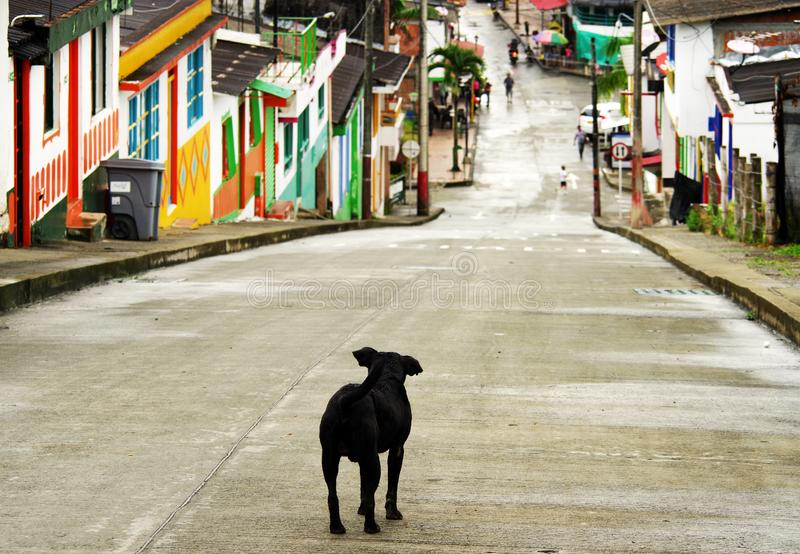 Lonely dog on a street in Buenavista, Quindio. Buenavista is a municipality in the south-central part of the department of Quindío, Colombia. It is known and royalty free stock images
