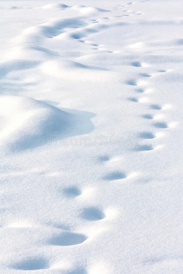 Free Lonely Drifted Tracks On White Snow Stock Photography - 28397382