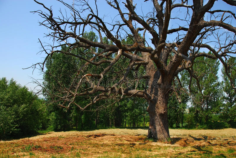 Download Lonely dry tree stock photo. Image of black, countryside - 28713842