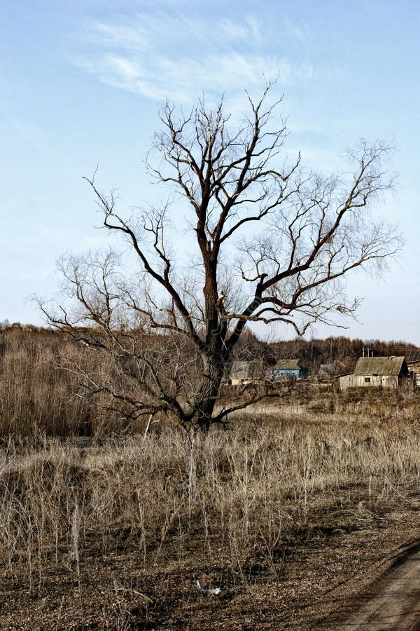 Lonely dry tree on the background of a small village.  royalty free stock image