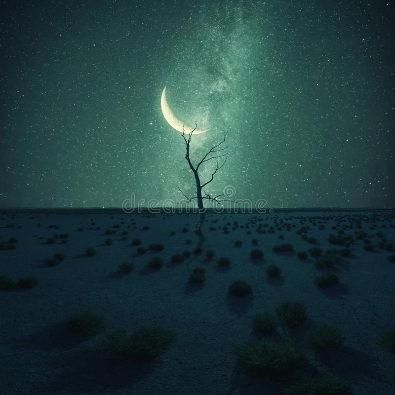 Dry tree in desert on night landscape. Lonely dry tree in desert on night landscape, stars and moon above, climate change. Vintage stylization, retro film filter royalty free stock photo