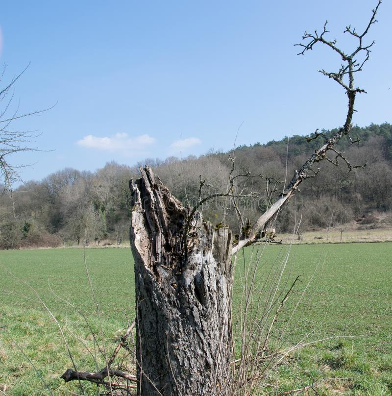 Lonely dry tree on wide meadow stock photos
