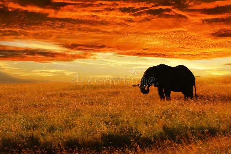 Lonely Elephant against sunset in savannah. Serengeti National Park. Africa. Tanzania stock image