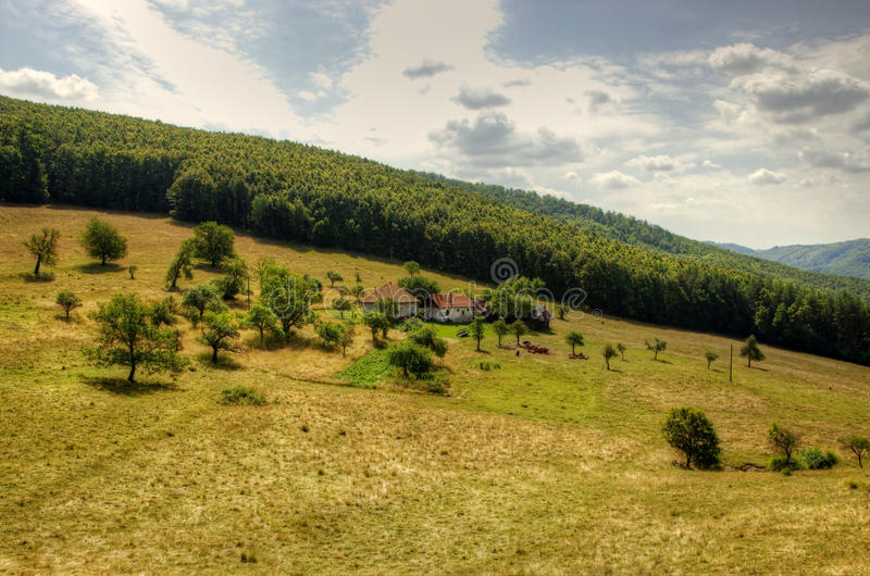 Lonely Farm House. On Hill with Cattle Hord royalty free stock photography
