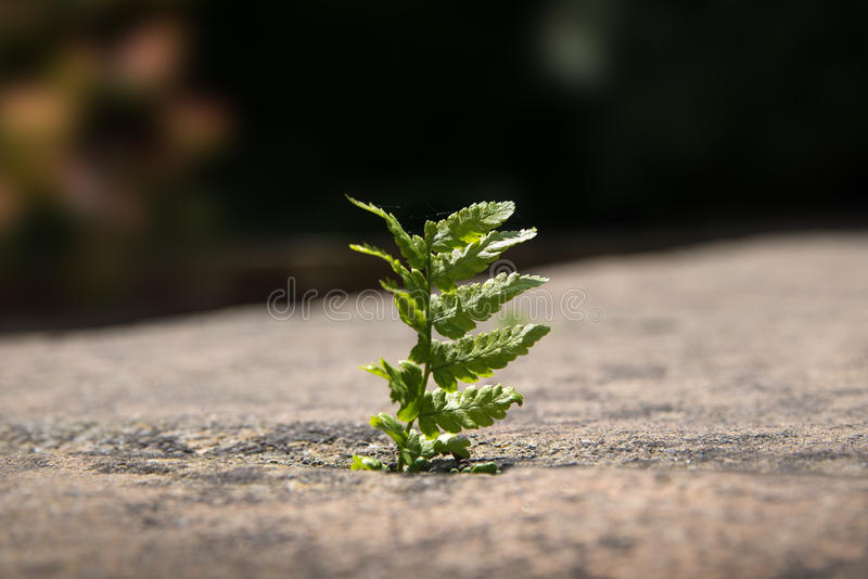 Download Lonely Fern stock photo. Image of blur, clean, macro - 31308576