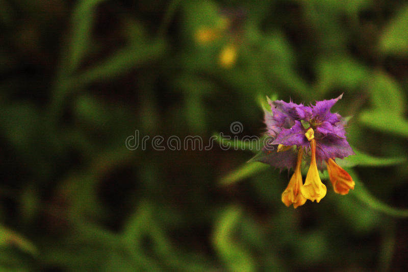 Lonely flower royalty free stock image