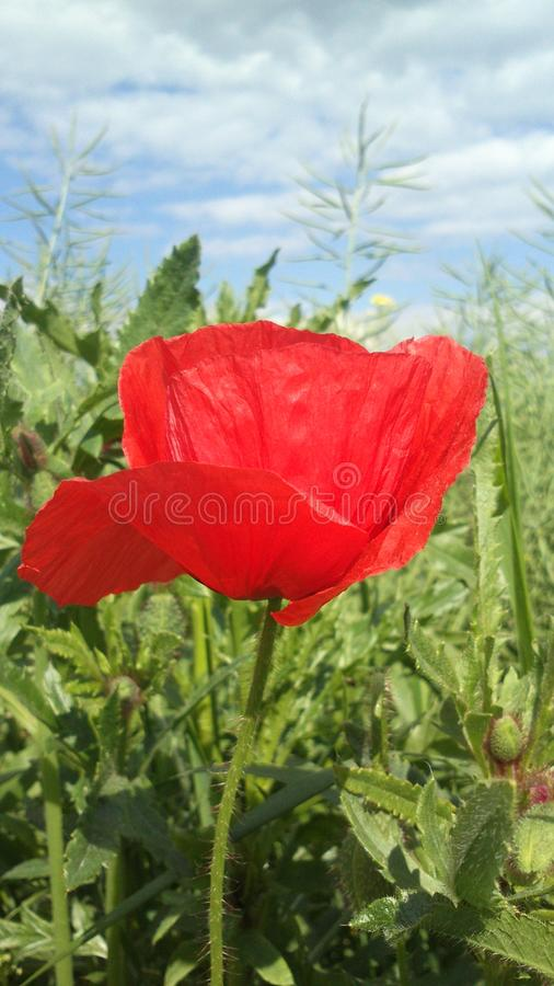 Lonely Flower stock photography