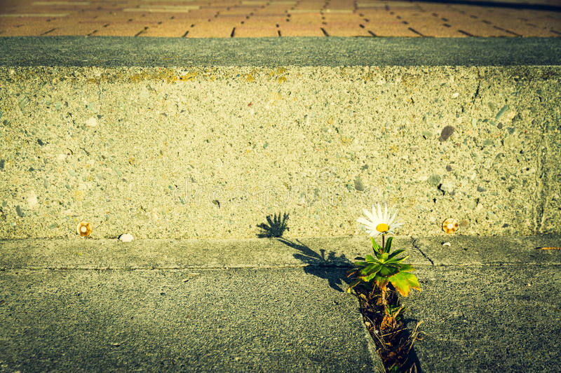 Lonely flower on the street. Picture of resistant flower, cross process royalty free stock photo