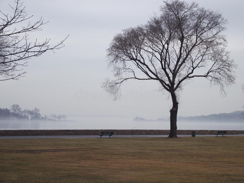 Lonely fog over lake stock photo