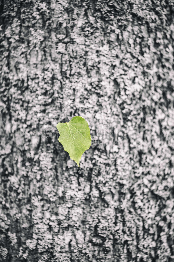 Lonely green leaf on black background stock photo