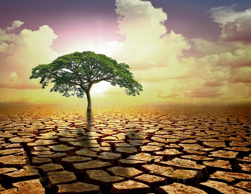 Lonely green tree under dramatic evening sunset sky at drought royalty free stock photo