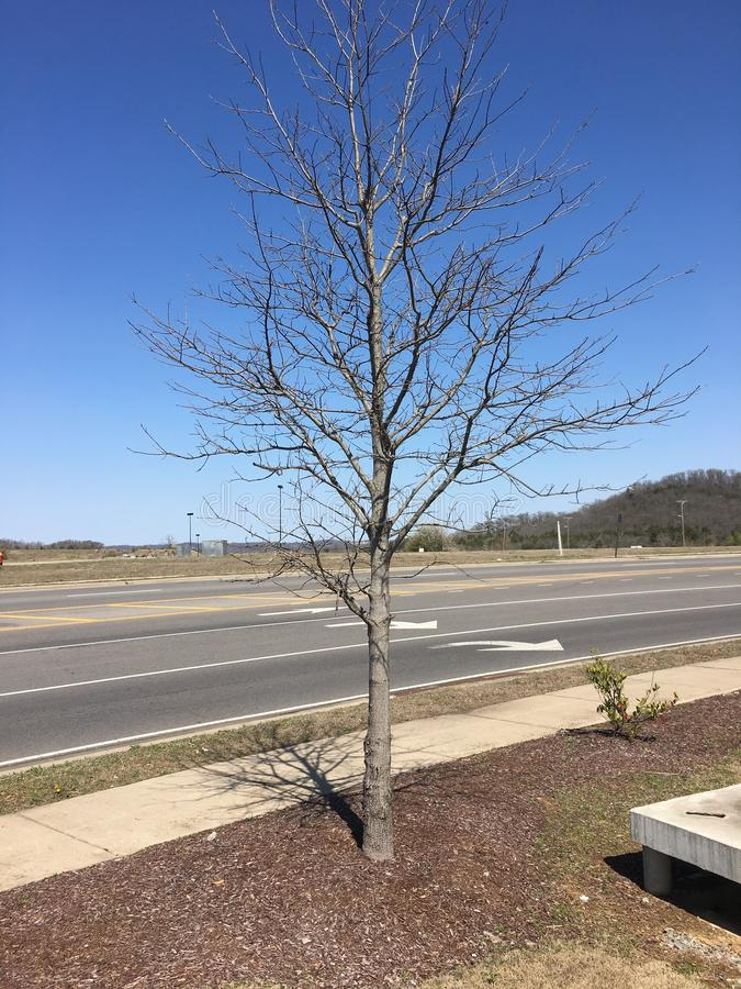 Lonely highway tree stock photography